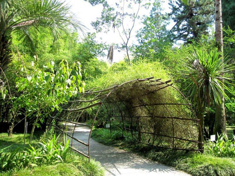 сухум фото ботанический сад