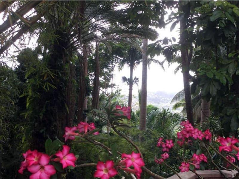 Ботанический сад Флауэр-Форест