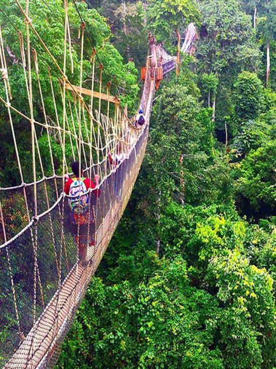 Подвесной мост в Гане